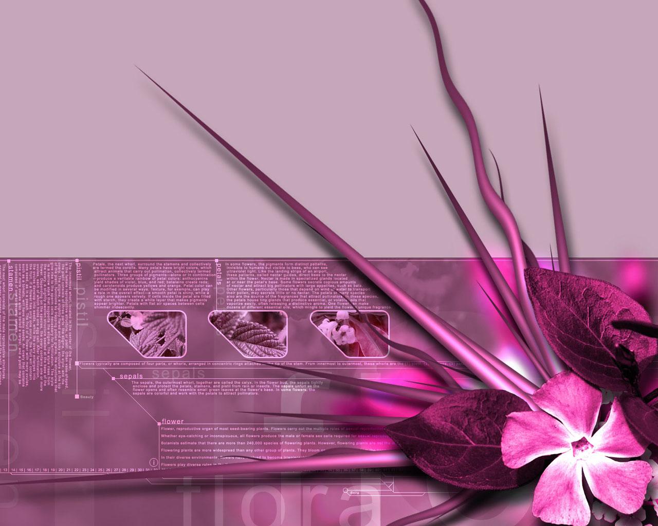 Obrázek na plochu v rozlišení 1280 x 1024 květiny v růžové