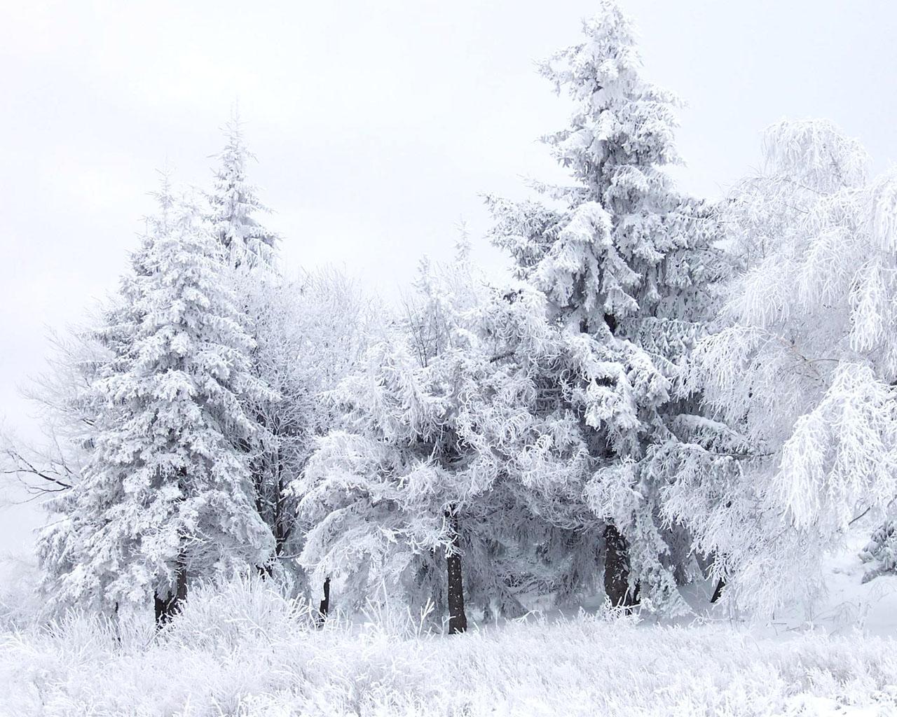 Obrázek na plochu v rozlišení 1280 x 1024 sněhová scenérie ve