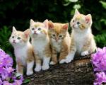 Obrázek - Roztomilá koťátka mezi květy