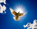 Obrázek - Andělský pohled na let holuba