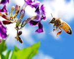 Obrázek - Včelka při práci v detailu
