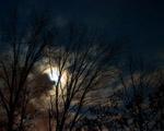 Obrázek - Lednová noc v přírodě
