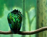 Obrázek - Zelený pták na větvi