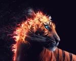 Obr�zek na plochu - Ohniv� tygr