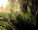 Obrázek - Typický den v deštném pralese