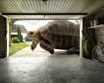 Obrázek - Obrovská želva před garáží