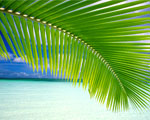 Obrázek - Poezie zvaná Bora Bora