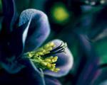 Obrázek - Překrásný příchod jara