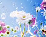 Obrázek - Jemné jarní pozadí Vašeho monitoru