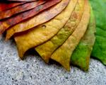 Obrázek - Barevná paleta podzimních listů