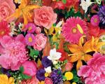 Obrázek - Směs barevných kvítků