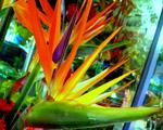 Obrázek - Cizokrajný barevný květ