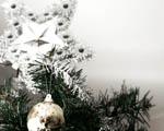 Obrázek - Vánoční hvězda na vánočním stromku