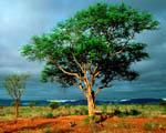 Obrázek - Národní Africký park Kruger