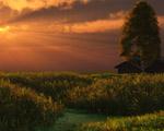Obrázek - Západ slunce za polem