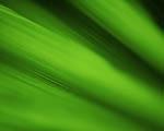 Obrázek - Zelené prostředí