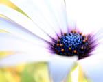 Obrázek - Bílá krása v květině