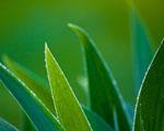 Obrázek - Okraje listů s kapkami rosy