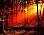 Obrázek - Rudý les