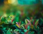 Obrázek - Zelený svět