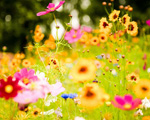 Obrázek - Živé květiny