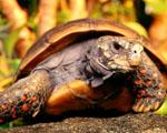 Obrázek - Starší želva v detailu
