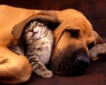 Obrázek - Nejlepší zvířecí kamarádi