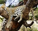 Obrázek - Odpolední spánek na větvi