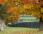 Obrázek - Farma a koně na podzim