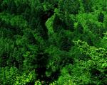 Obrázek - Les z ptačího pohledu