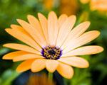 Obrázek - Elegance žlutého květu