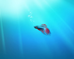 Obrázek - Poslední rybka na pozadí