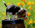 Obrázek - Malý Buddy na sudu