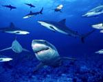 Obrázek - Nejbezpečnější místo v oceánu