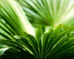 Obrázek - Listy palmy v denním světle