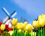 Obrázek - Levná dovolená v Holandsku