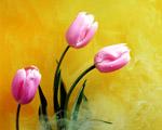 Obrázek - Růžové tulipány v kouřovém oparu