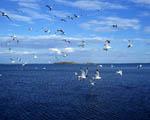 Obrázek - Volní jako ptáci