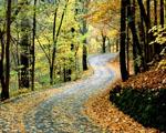 Obrázek - Podzimní cesta Tennessee
