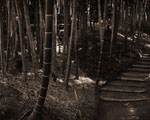 Obrázek - Bambusová stezka