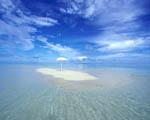 Obrázek - Poslední tropická oáza na Zemi
