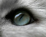 Obrázek - Kočičí oko v detailu