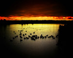 Obrázek - Západ slunce nad rybníkem