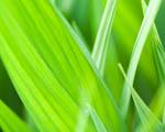 Obrázek - Zelená harmonie