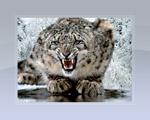 Obrázek - Male milé zvířátko