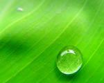 Obrázek - Kapka rosy na listu