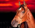 Obrázek - Kůň v detailu