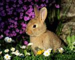 Obrázek - Malý zajíček mezi květinami