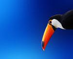 Obrázek - Mladý Tukan