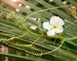 Obrázek - Osamocený bílý květ rostliny